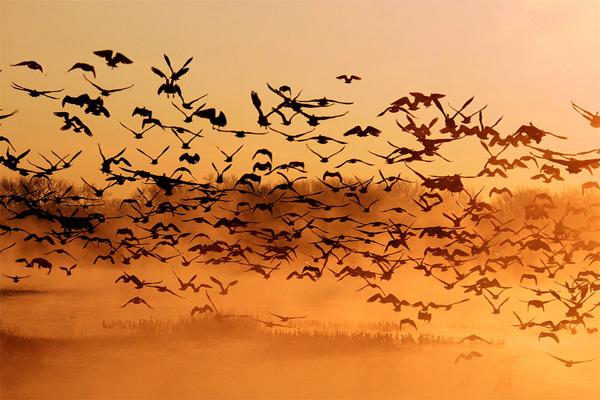 2016-09-22-birds-gwin.jpg