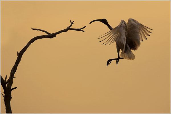 White Birds by Jennifer Zaynab Maccani