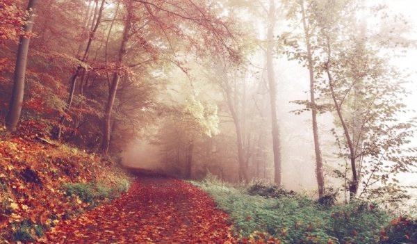wood-lying-pathways-autumn-forest.jpg