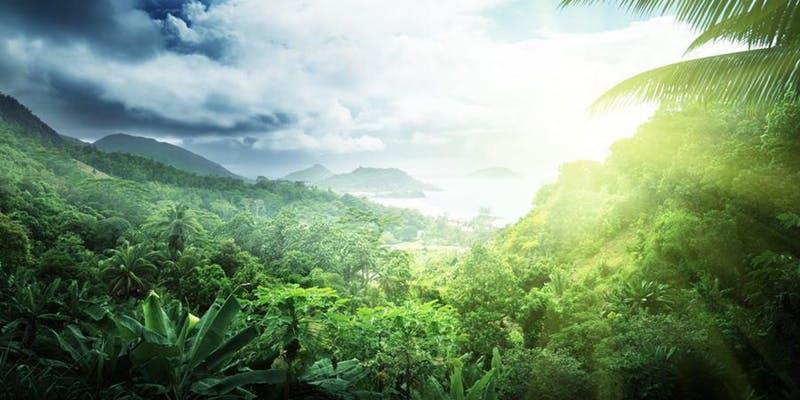 RainforestAB2.jpg