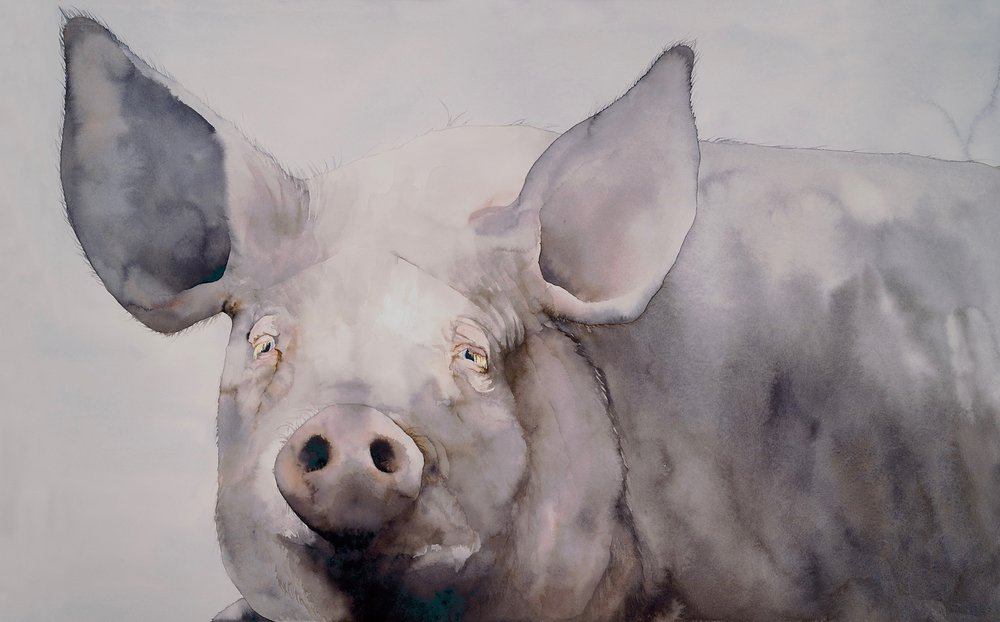 FINE PIG, a watercolor by Hilary Austen