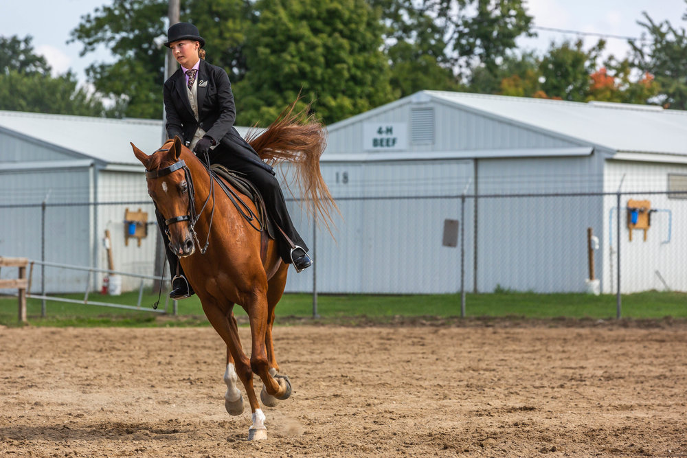 Andrea Horse (7 of 39).jpg