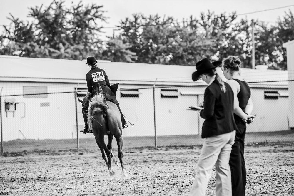 Andrea Horse (8 of 39).jpg