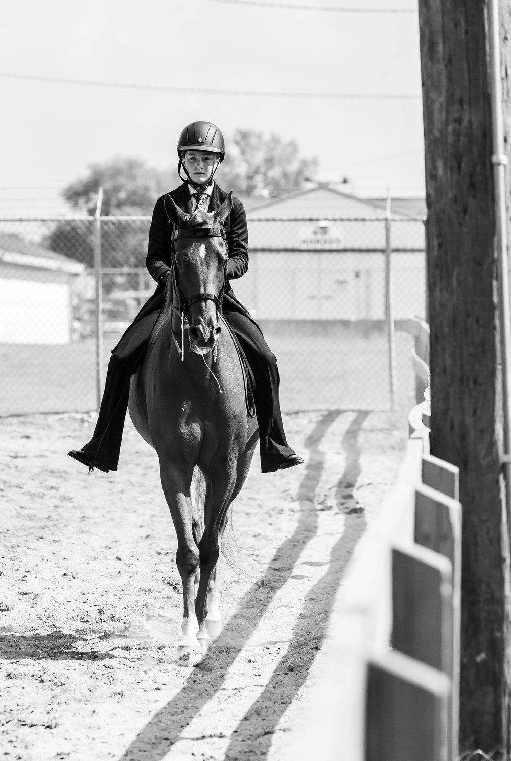 Andrea Horse (36 of 39).jpg