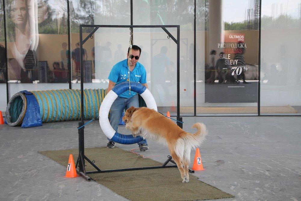 Activaciones - La comunidad Pet-Firendly es extremadamente activa. Siempre estamos en busca de espacios y experiencias nuevas.¿Tienes alguna idea? ¡Cuentanos!