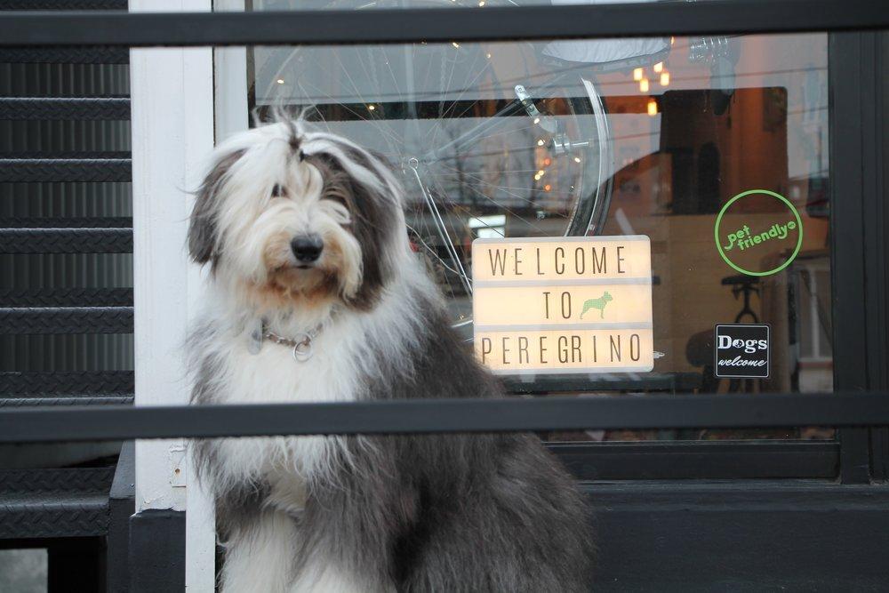 Consultoría y certificación Pet-Friendly - Si tu proyecto necesita opinion de expertos para asegurar una Cultura Pet-Friendly, contáctanos, te podemos ayudar.