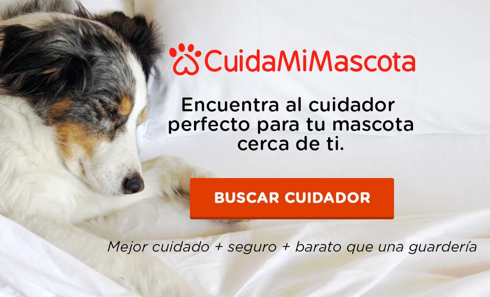 banner_cuidamimascota2.png