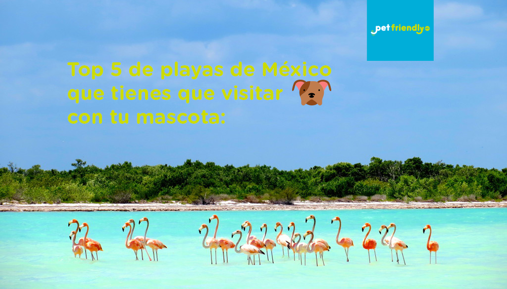 holbox.png