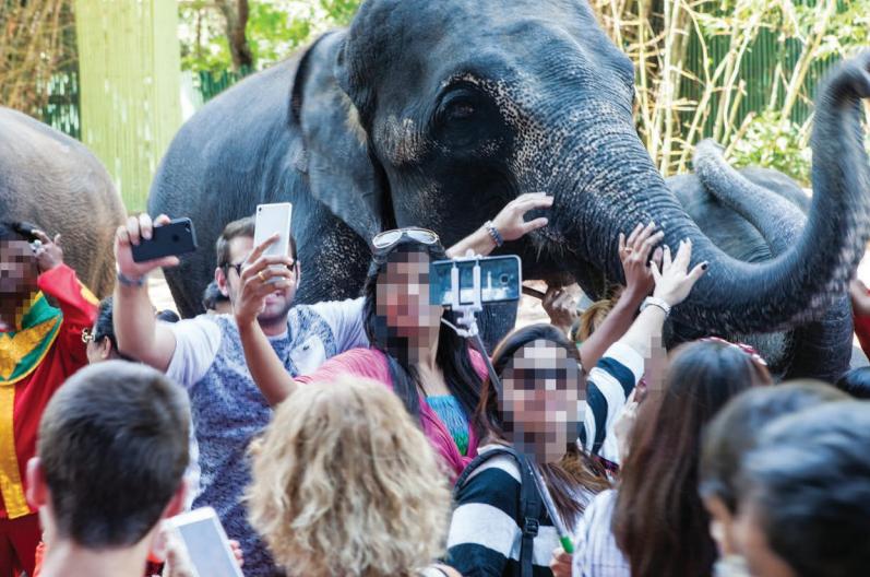- 54% de las 249 atracciones encontradas en línea ofrecían contacto directo con animales, permitiendo cargarlos para las fotos.35% los privan de alimento por horas y usan comida para atraer a los animales11% te ofrecen la oportunidad de nadar con los animales
