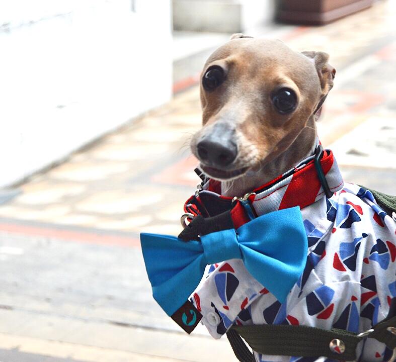 (Collar y Moño de Extradoginarie, Camisa de MexiCan Pet Shop)