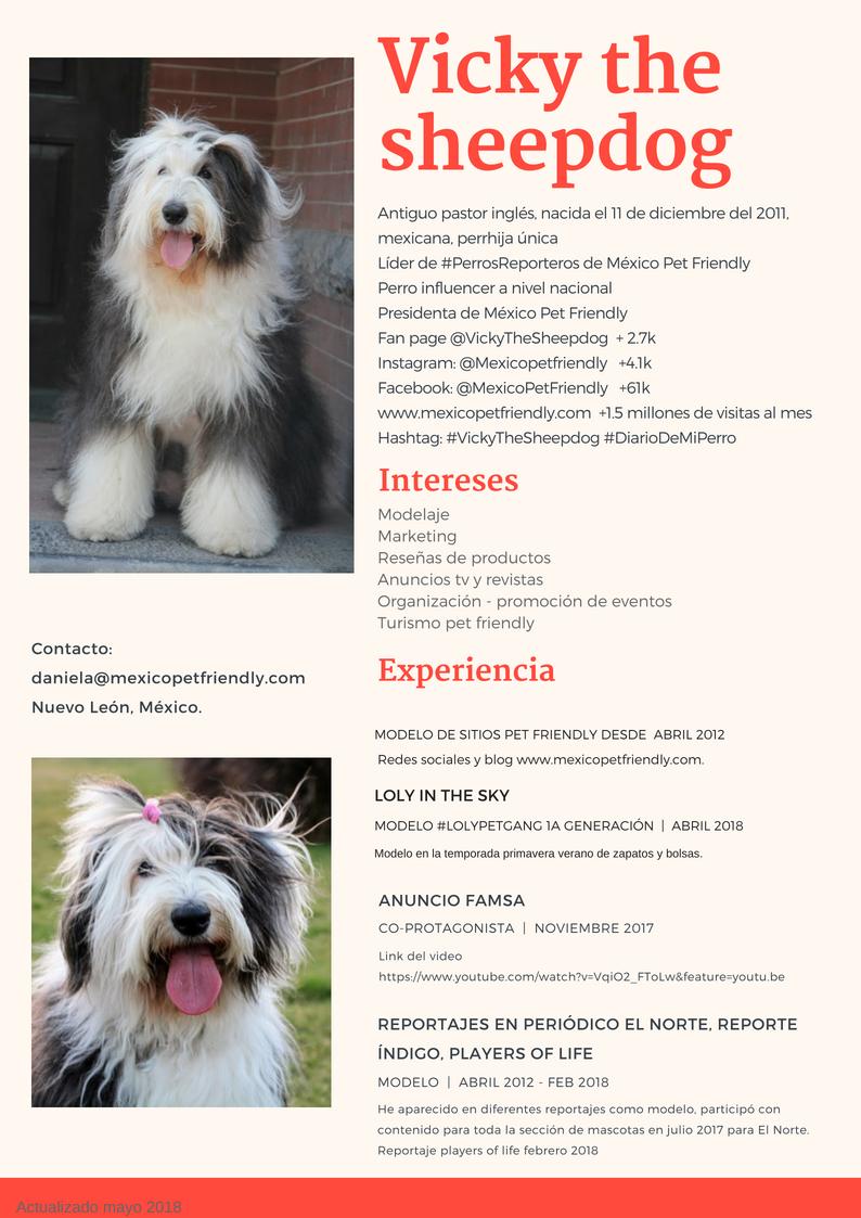 Vicky the sheepdog CV