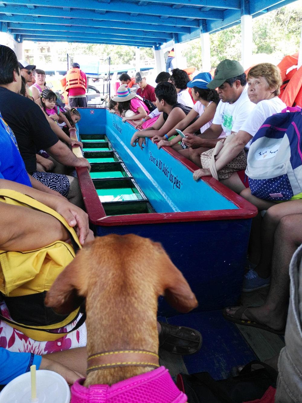 acapulco3.jpg