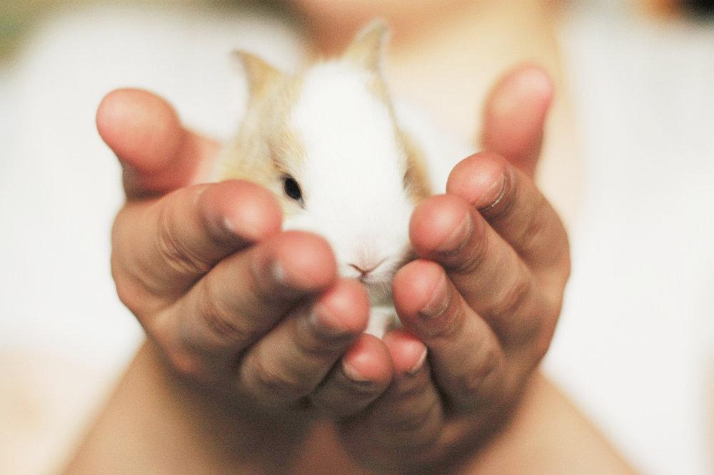 rabbit-2742525_1280.jpg