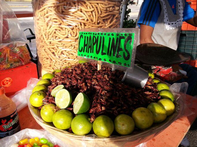 Græshopper i Mexico