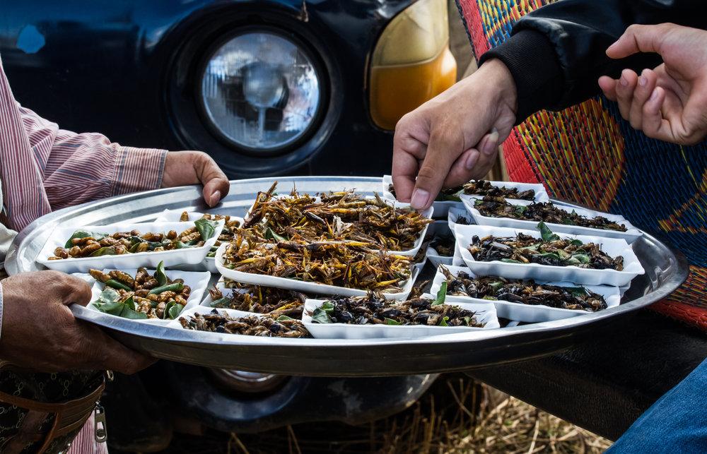 Spiselige insekter i Thailand