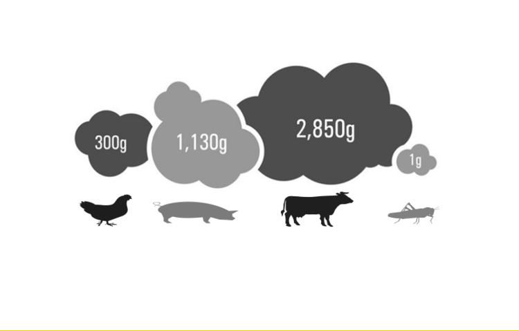 Udledning af drivhusgasser pr. 1 kg protein. (  Kilde   :    FN's fødevare- og landbrugsorganisation )