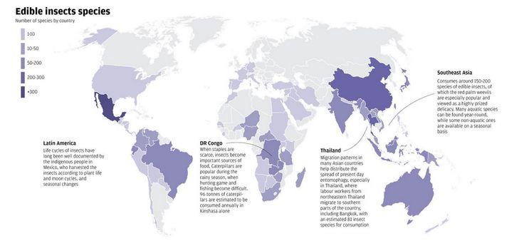 Hvor i verden spises insekter? - Insekter spises traditionelt i mange forskellige kulturer.Læs b.la. mere om Mexicos kærlighed til stegte grashopper, eller de populære insektmarkeder i Asien her