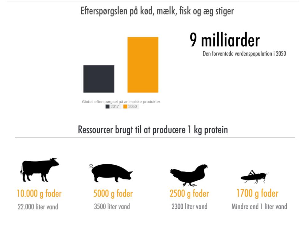 Insekter er ikke bare en god kilde til protein, men også en yderst bæredygtig kilde til mad. Insekter kan opdrættes klimavenligt, uden at det kræver meget plads eller vand. Overvej at prøve spiselige insekter - de smager faktisk godt