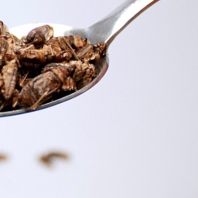 Cricket farming provide a space saving & sustainable alternative because it requires considerably less land, feed & water 🍽 🌍 #futureoffood #crickets