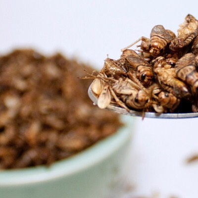 Crickets are often mentioned as the future of food and there are already quite a few products based on crickets out there. Have you tried crickets yet? And what did you think? 😋🍽😋#futurefood #crickets