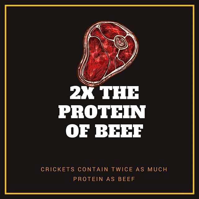 One of the great reasons to eat insects is their amazing nutritional value.  Crickets contain as much as 60% protein and twice the as much a as steak 💪🏼💪🏼#futurefood #crickets