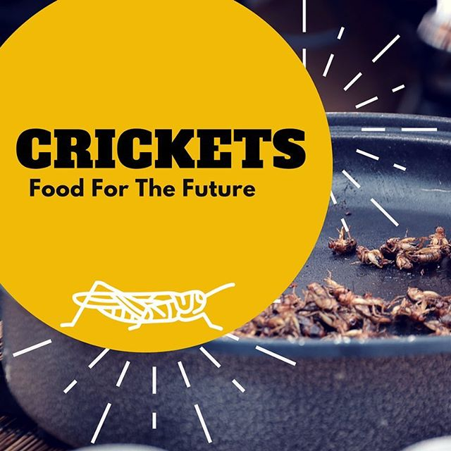 Crickets are often mentioned as the future of food because of their great nutritional value and low ecological footprint. And they taste good too!  You could try them on pizza 🍕 or try adding cricket powder to your next baking project 🍰 only imagination is the limit! 🥙🥘😋
