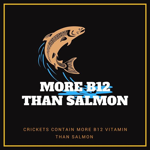 Vitamin B12 is important for keeping the body's nerve & blood cells healthy 💪🏼 It's a nutrient almost only found in animal products and luckily crickets contain more B12 than both chicken & salmon 👌🏼 #futurefood #crickets