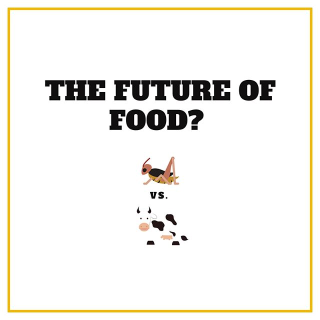 Do you know why insects are considered a part of our future food?  Due to the growing population, the demand for food will continue to increase dramatically.  Climate change, reduced productivity of agricultural lands, overfishing, less freshwater resources, pollution from fertilizers and other factors mean that we have to find alternative food sources.  If you compare crickets to cattle farming, crickets can be farmed with a much smaller ecological footprint, because they require significantly less feed, space & water and are much more sustainable and viable as a food source 👉
