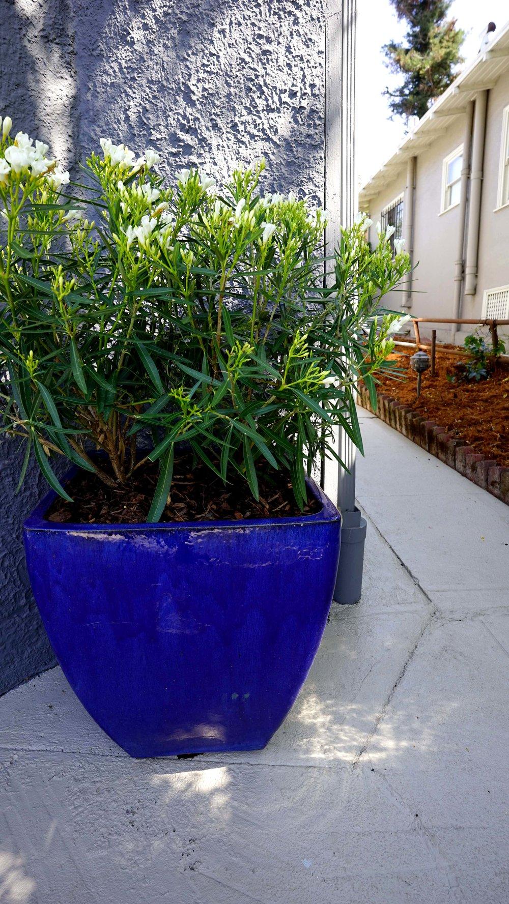 Blue planter_VERT copy.jpg