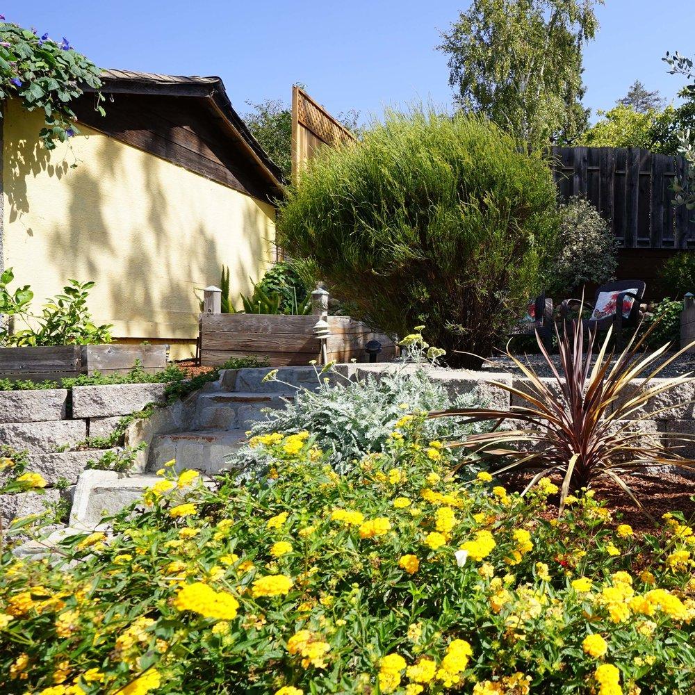 Garden flowers_Ochre wall_cropSQ.jpg