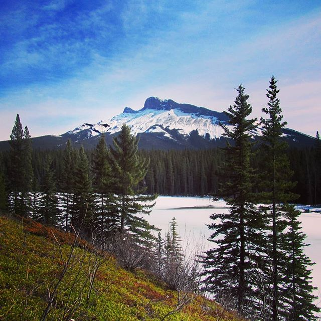 Two seasons in a photo? That's Alberta! Y2Y staffer Claire Jarrold was in the Bighorn backcountry recently and captured the iconic spring weather mix we often see: patches of green soaking up sun against sheets of white snow and ice. Learn more about our work to protect this area at @albertapreserves or the link in our bio.