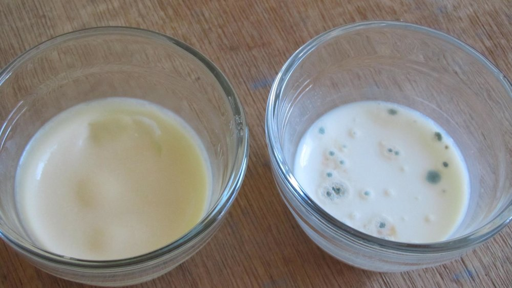 raw vs pasteurized milk left out