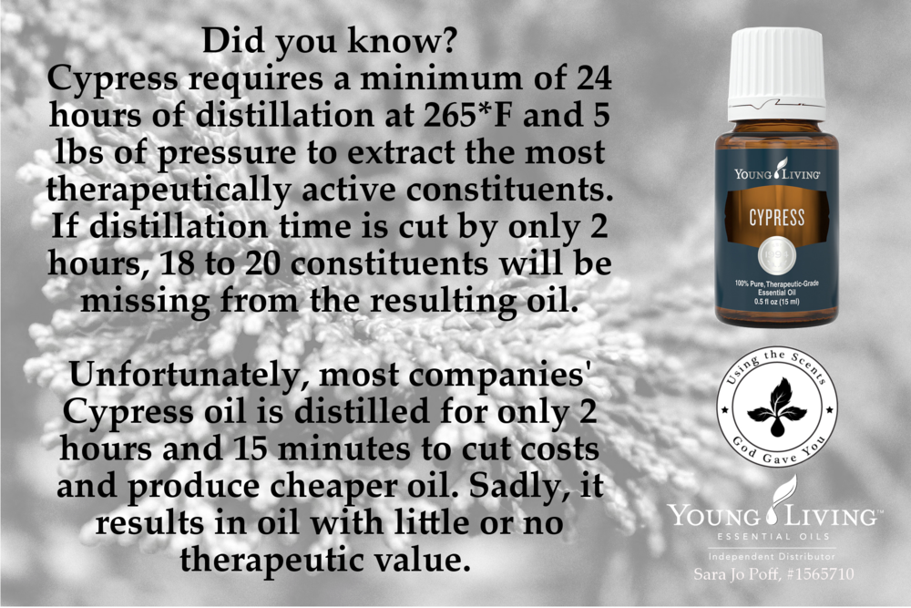 The Only One For Me--Why A Holistic Health Practitioner Chose One Company for Essential Oils--HFFG