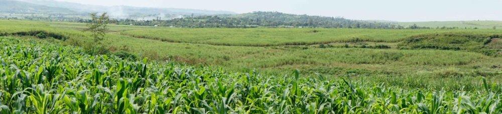 Kenya-2016-LMD-1468-2-1024x232.jpg