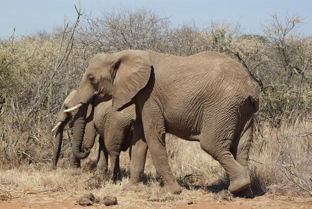 joylove-kenya2016-3.jpg