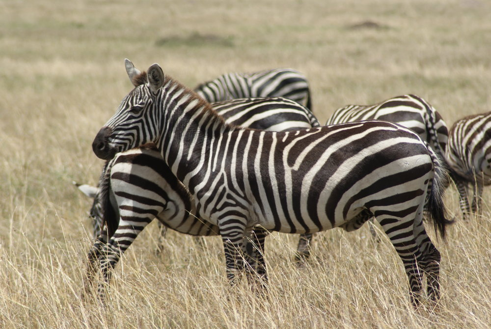 joylove-kenya2016-13.jpg