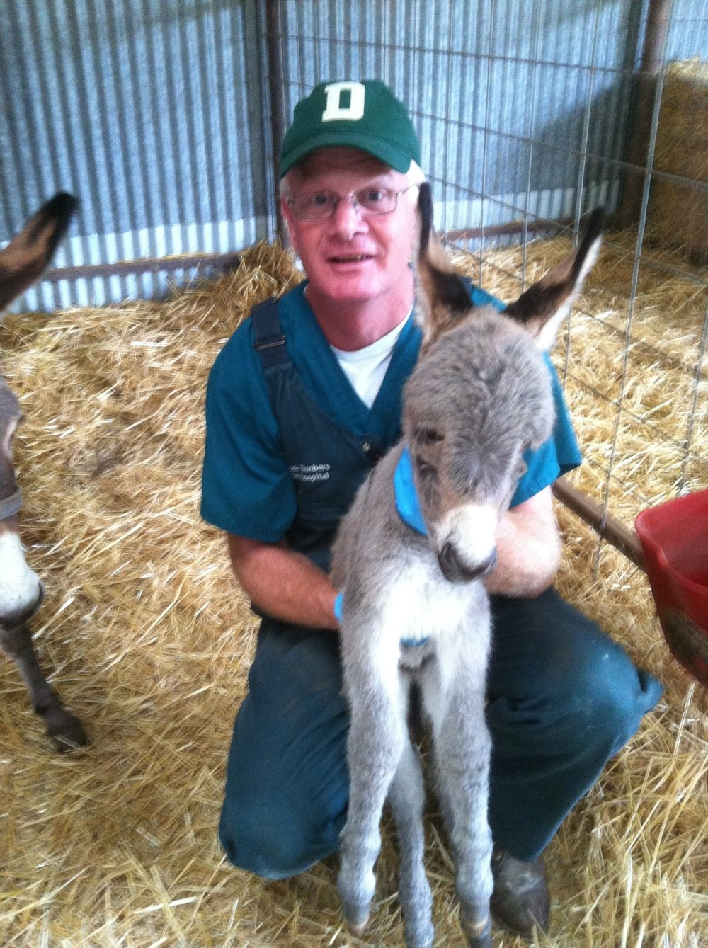 Dr. Arn Anderson working on a miniature donkey foal.