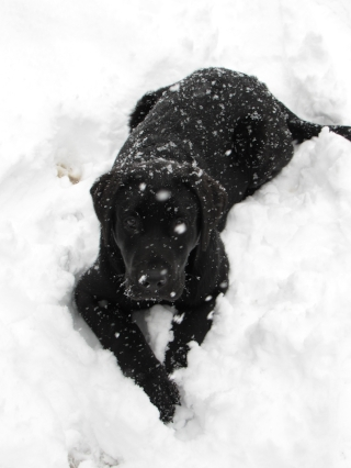 gracie in snow.JPG