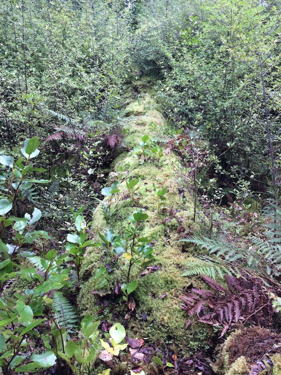 Forest growth.jpg
