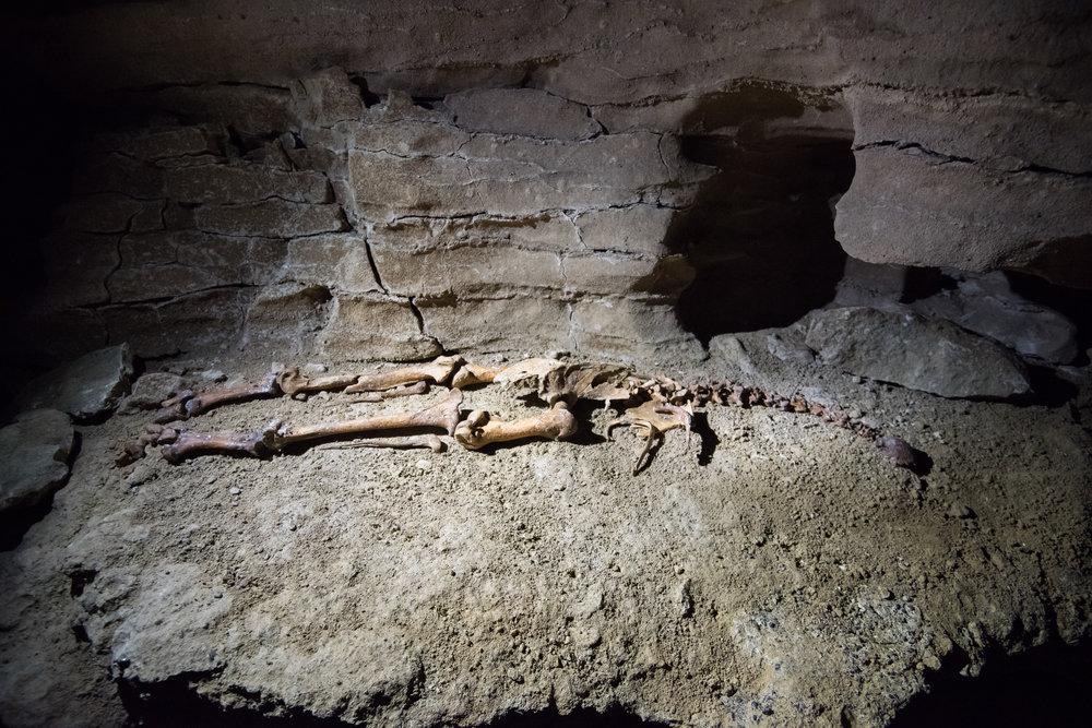 karamea-caves (3).jpg