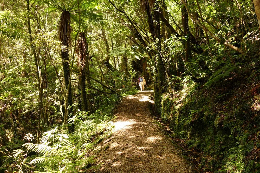 oparara-trail-01.jpg