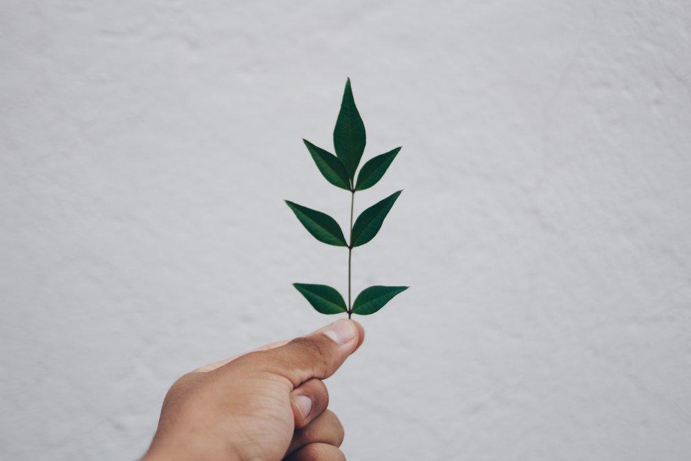 environmentalism_sustainability