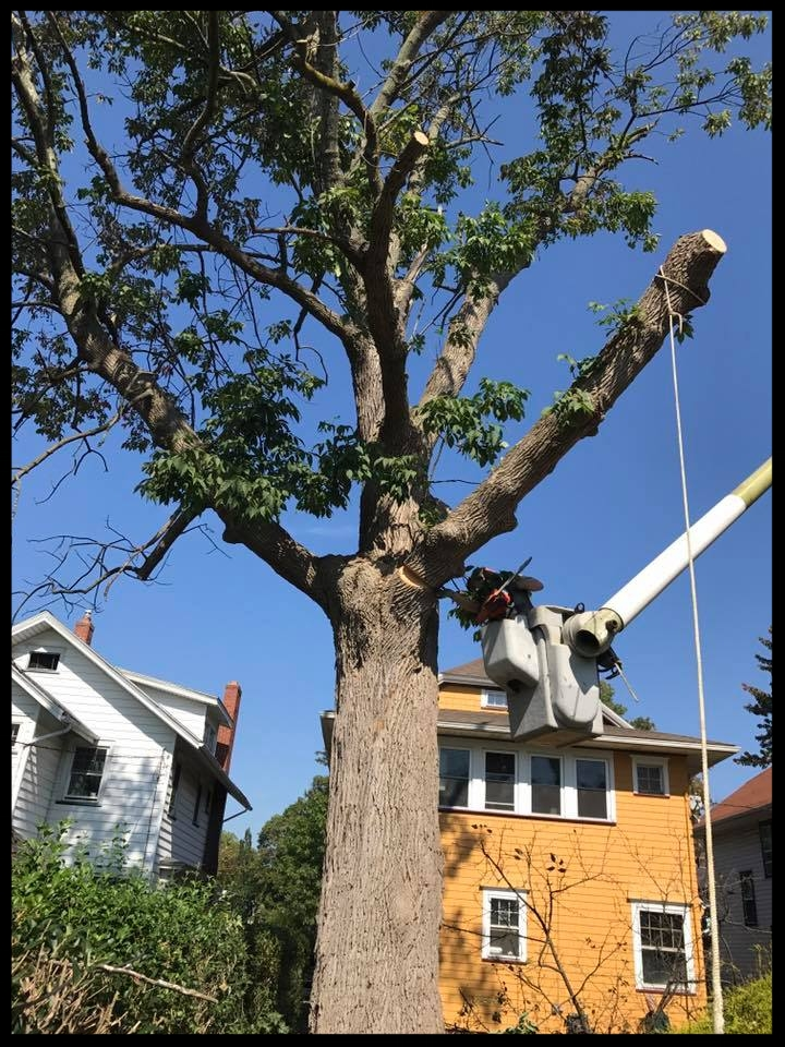 Big tree little space1.jpg