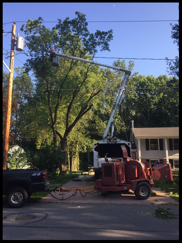 High tree in power lines.jpg