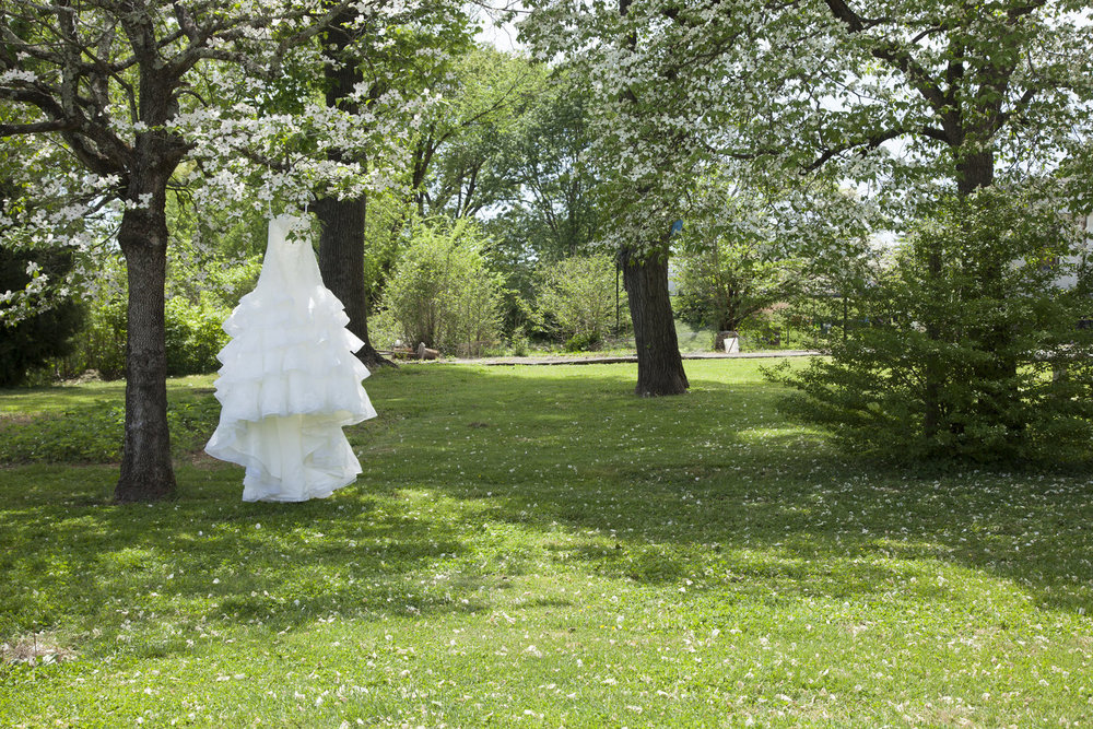 Wedding+Dress+hanging+in+Dogwood+Trees.jpeg