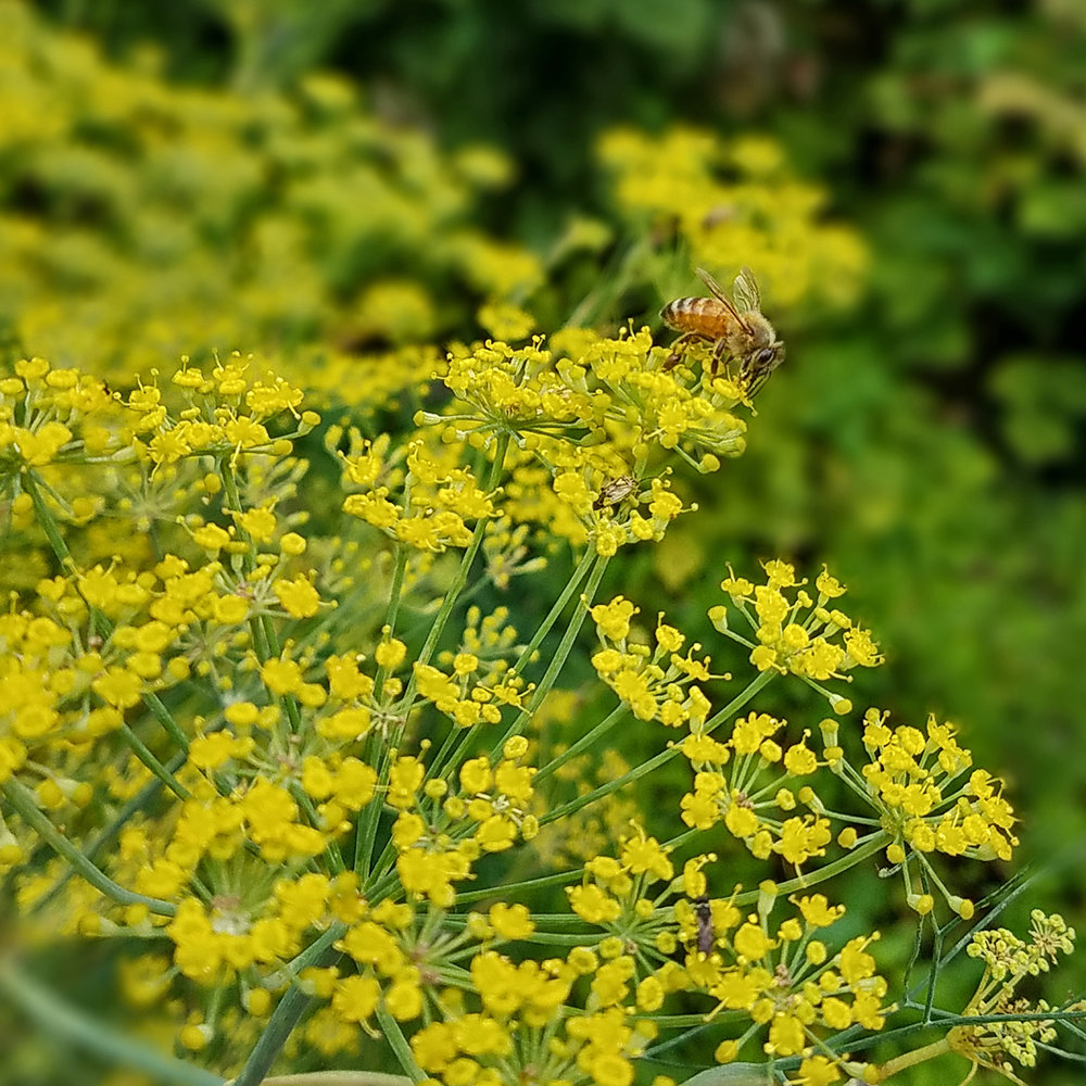1303_Garden01.jpg