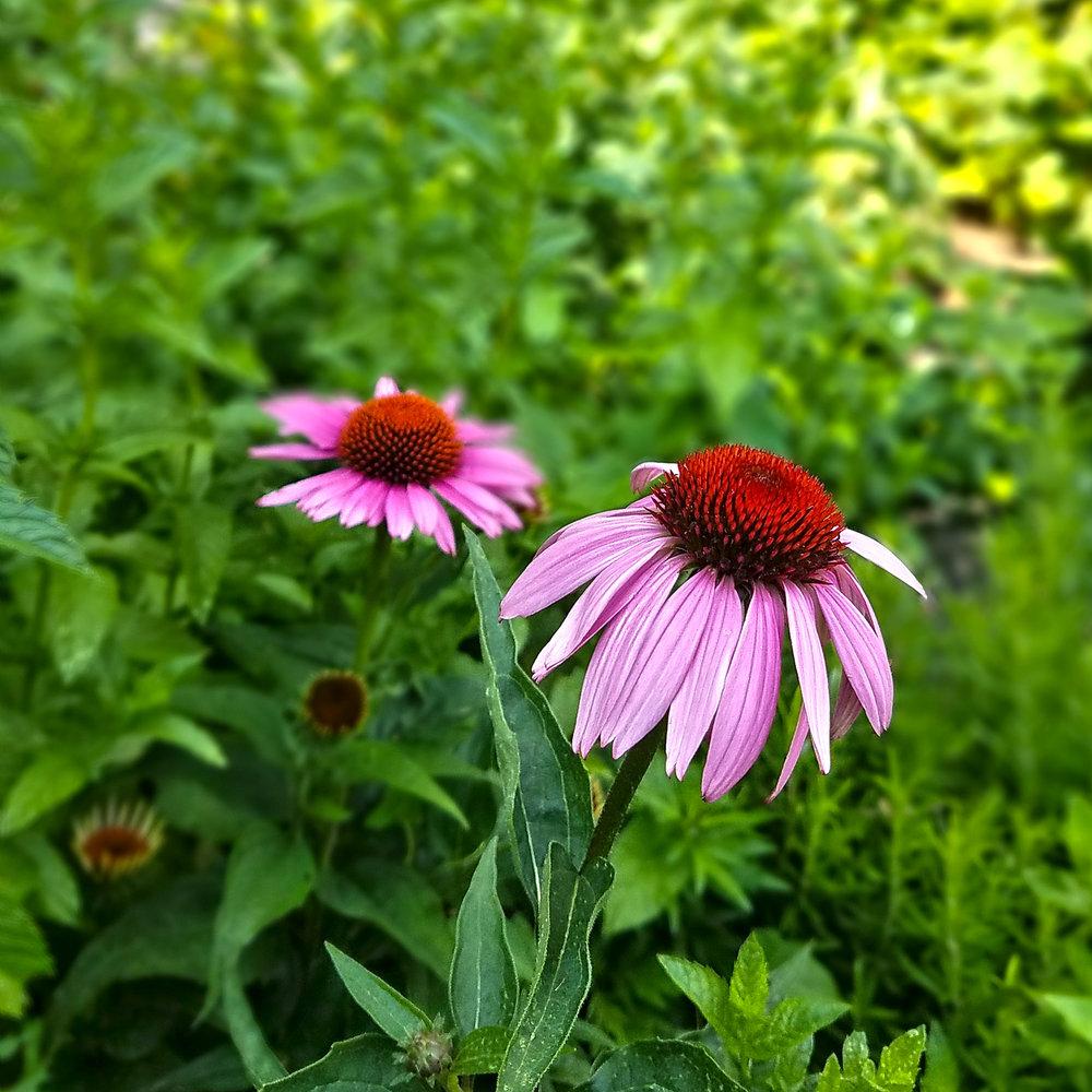 1303_Garden03.jpg