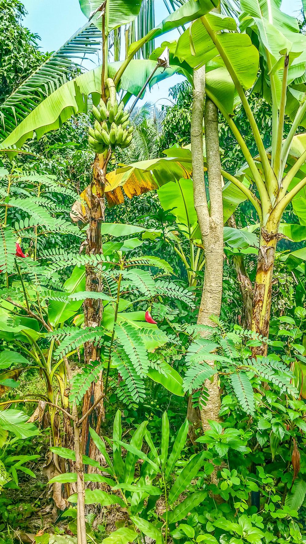 Banana Pic.jpg