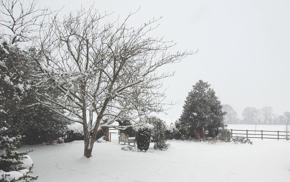 snow garden tree cherry