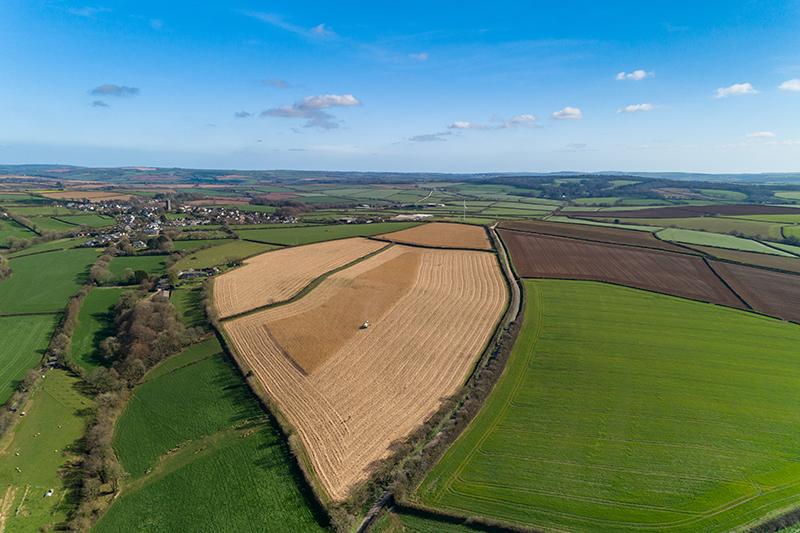 2. Burlerrow-Farm miscanthus field sml.jpg